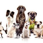 Scatter Tubes for all dog breeds