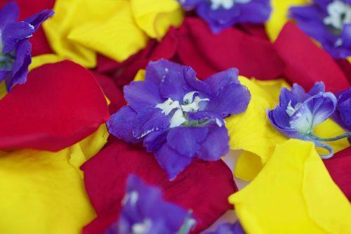 rainbow bridge petals