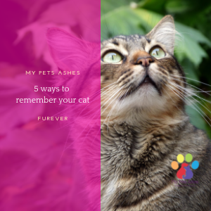 5 ways to remember your cat