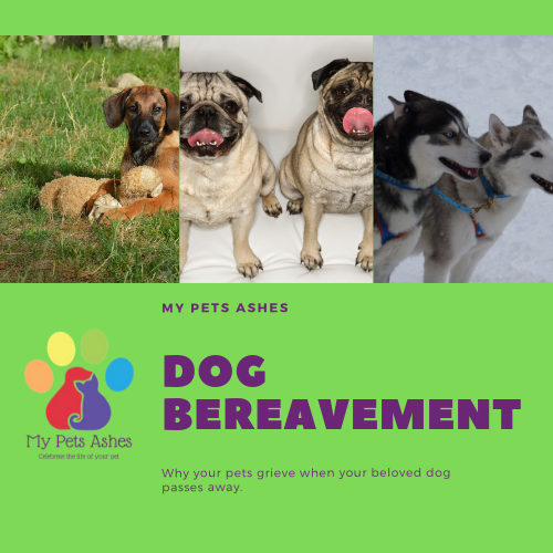 Dog Bereavement